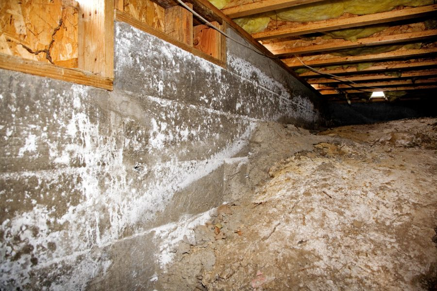 Test For Mold In-Home Portland OR
