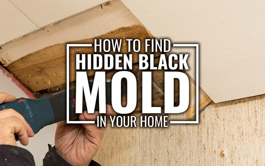 How to Find Hidden Black Mold in Your Home