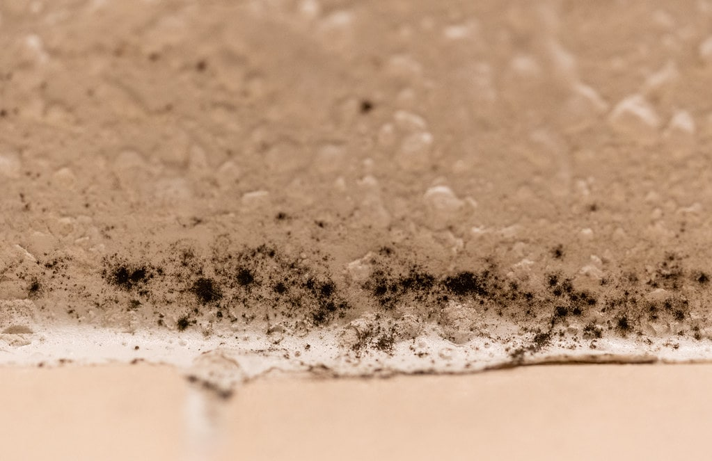 Black mold growing in a home shower