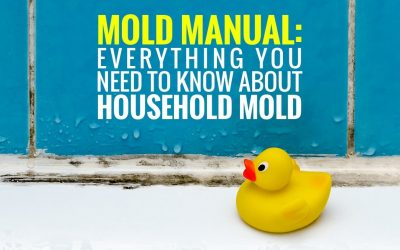 Mold Manual: Everything You Need to Know About Household Mold