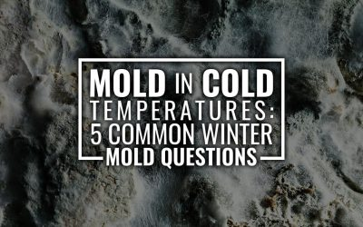 Mold in Cold Temperatures: 5 Common Winter Mold Questions