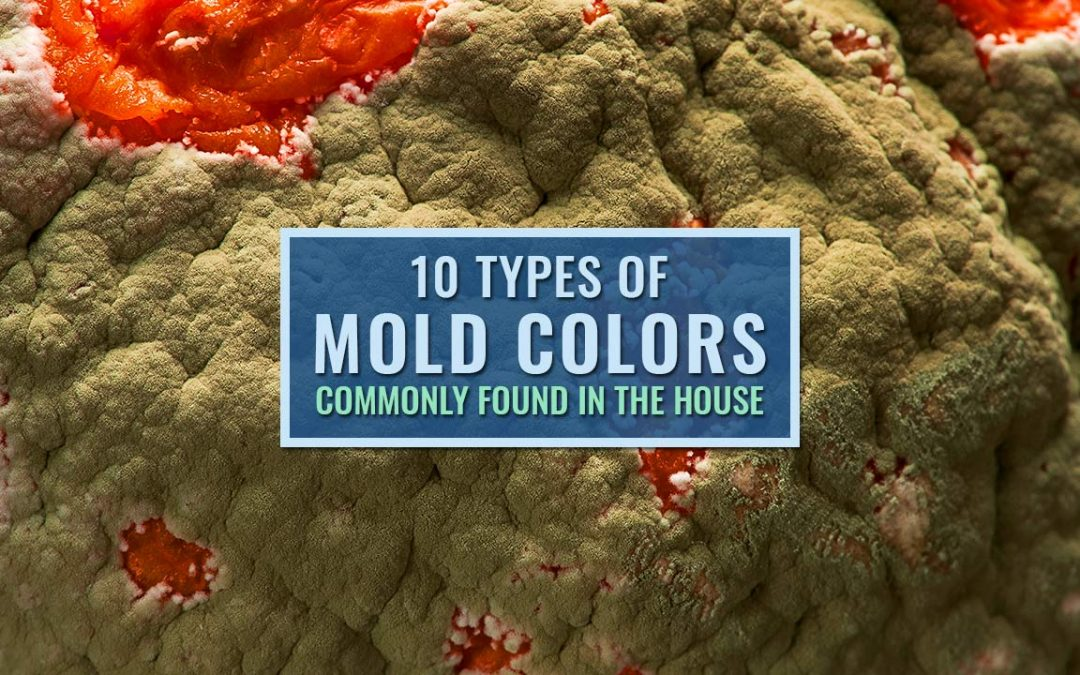 10 types of mold colors commonly found in the house