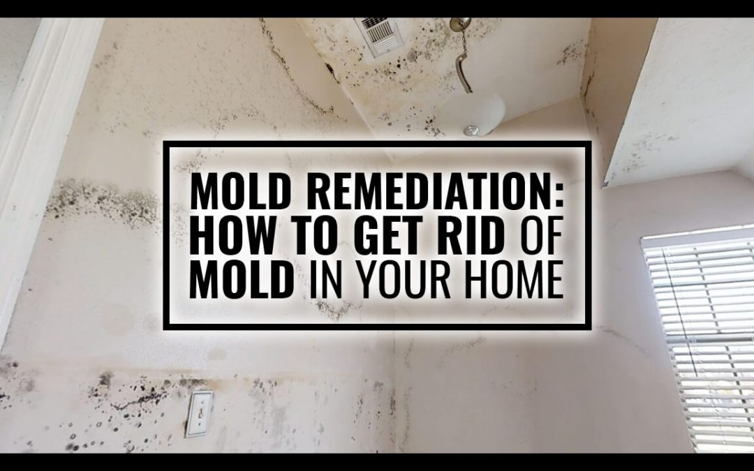 Mold Remediation: How to Get Rid of Mold in Your Home