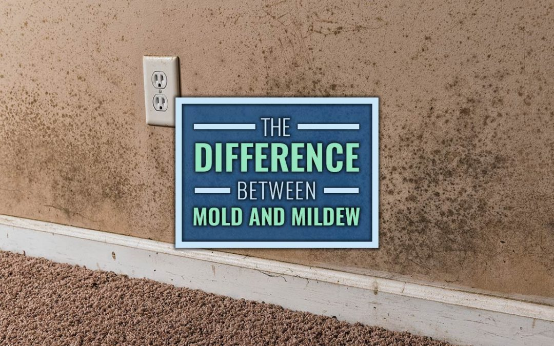the difference between mold and mildew