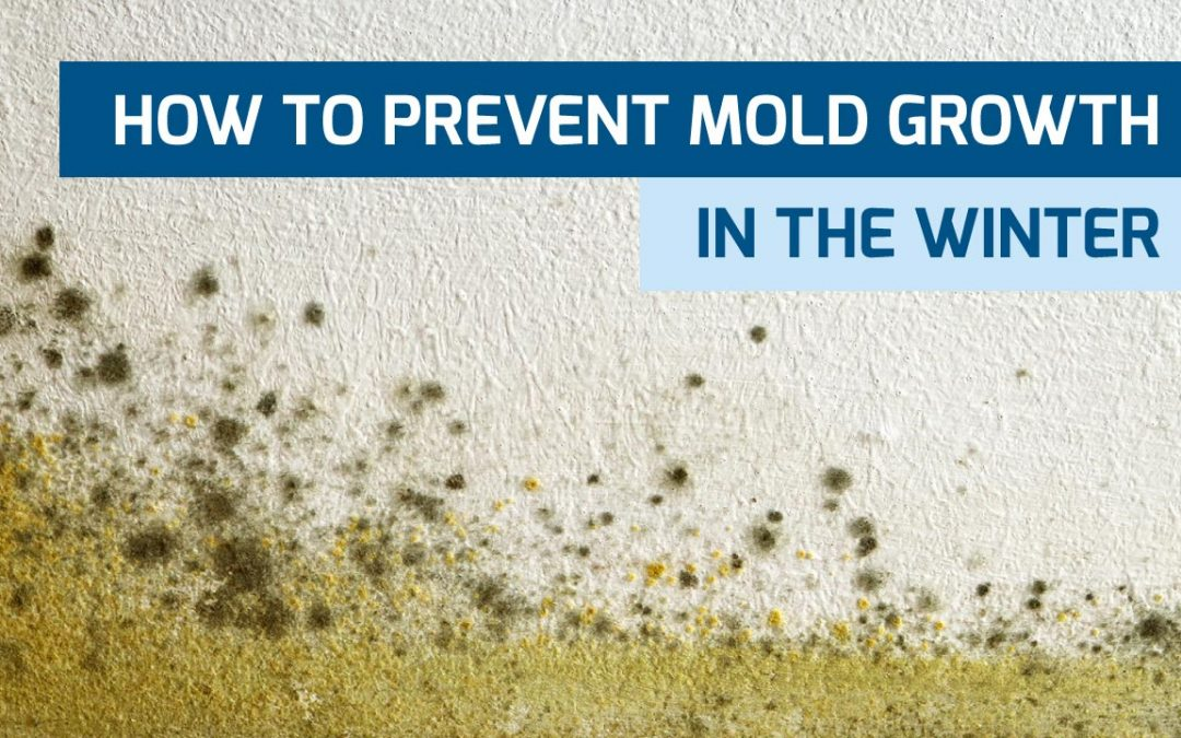 How to Prevent Mold Growth During the Winter