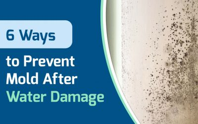 6 Ways to Prevent Mold After Water Damage